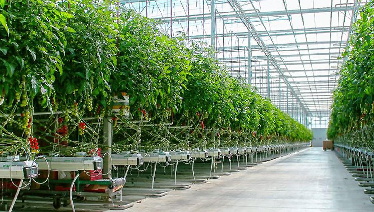 D4-001 Agriculture development