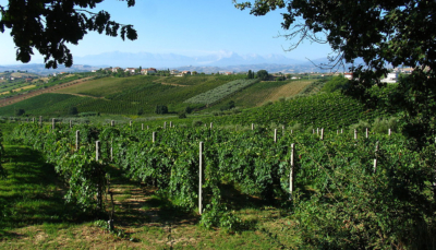 Italian wine exports reach new heights