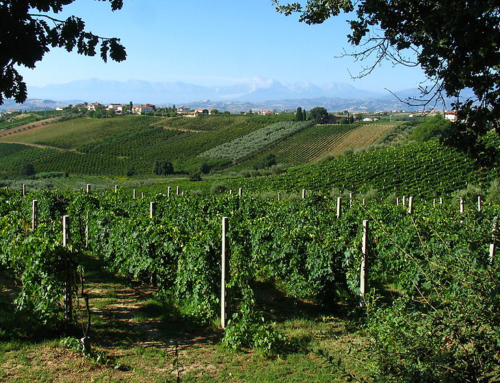 6 billion euro! Italian wine exports reach new heights.