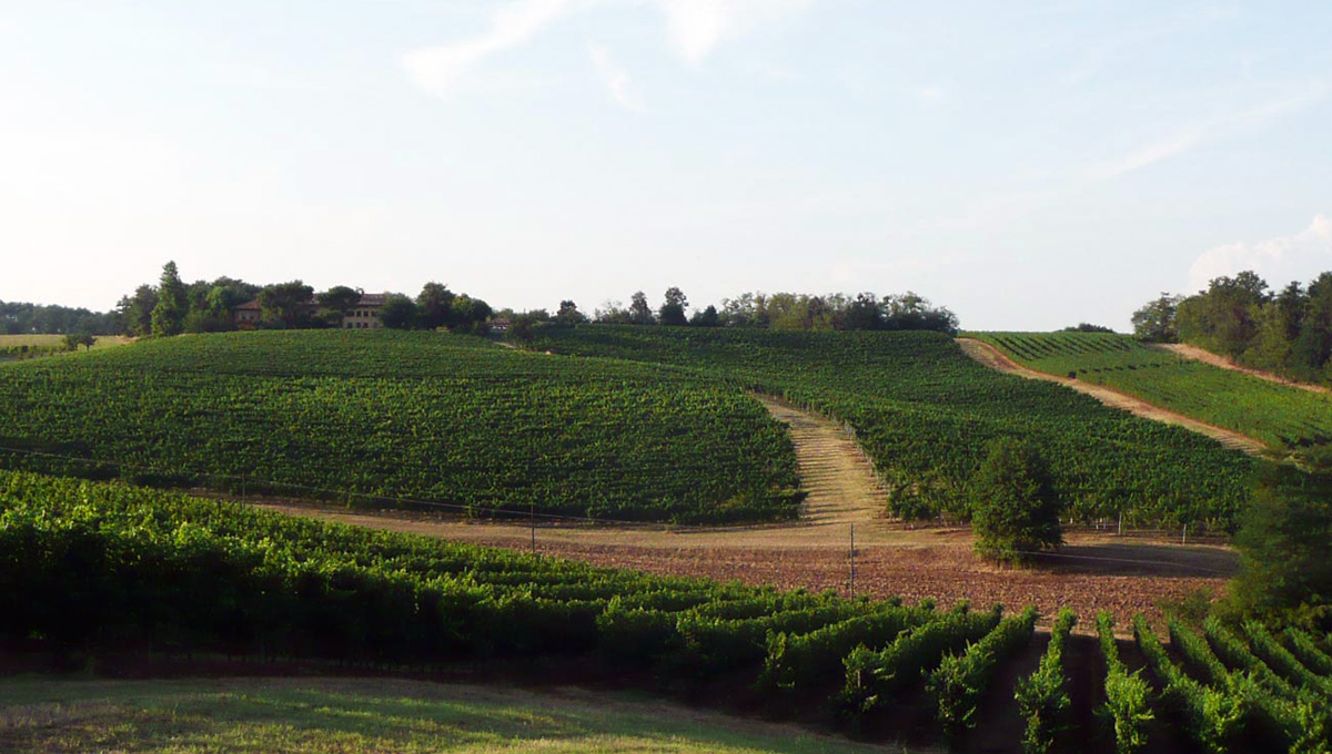 A world-class winery on the hills of Monferrato